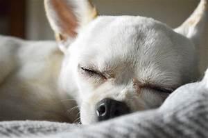 Hotel Pour Chien : h tel pour petits chiens mon h bergement animal ~ Nature-et-papiers.com Idées de Décoration