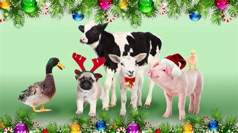merry christmas pictures with animals merry christmas from the animals youtube