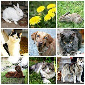 Haustiere Für Kinder : haustiere f r kinder und familien ~ Orissabook.com Haus und Dekorationen