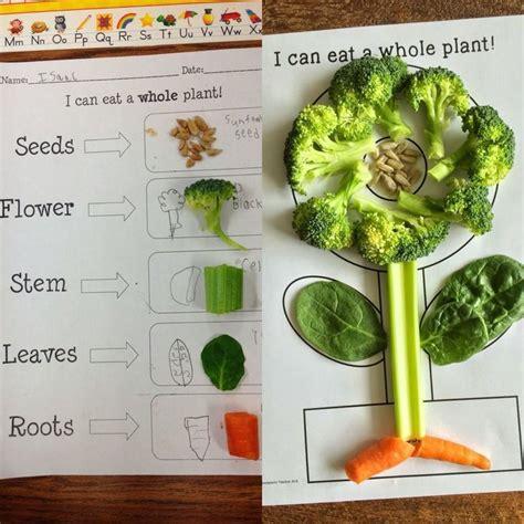 plant activities  kindergarten preschool  grade