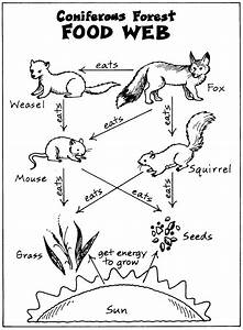 Food Web Coloring Pages Food Chain Coloring Pages ...