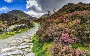 Snowdonia, National, Park, Wales, Conwy, United, Kingdom, Heather