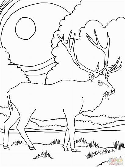 Coloring Elk Mountain Pages Rocky Printable Scenery