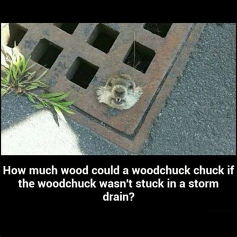 How Much Wood Could A Woodchuck Chuck If The Woodchuck