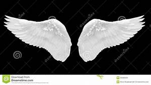 White Angel Wing Isolated Royalty Free Stock Images ...