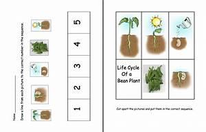 Here U0026 39 S A Set Of Pages On The Life Cycle Of A Bean Plant