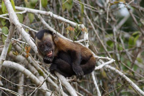 amazon jungle animals amazon wildlife peruvian amazon
