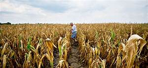 Midwest Drought  Dry  Hot Weather Depletes Small
