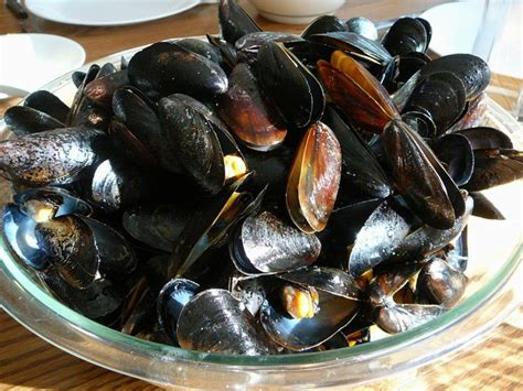 steamed mussels recipe cancooker steamed mussels recipe cooker steamed mussels recipe