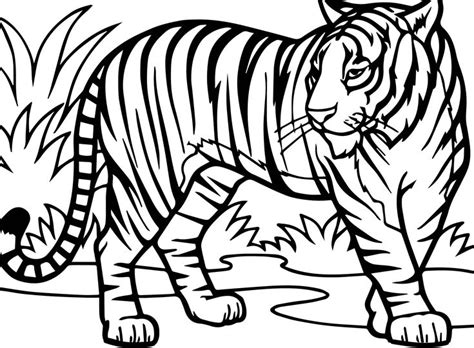 tiger coloring pages ideas  awesome pattern