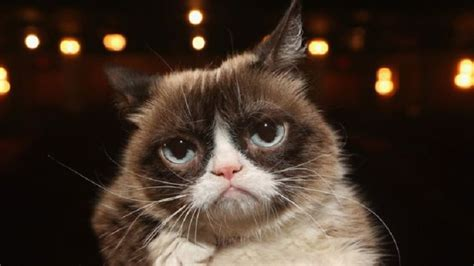 whats   jesus  toast grumpy cat   apple