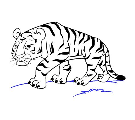 tiger drawing pictures  getdrawingscom