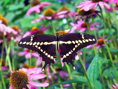 butterfly  stock photo public domain pictures
