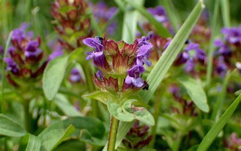 unkraut kleine weiße blüten kleine lila bl 252 mchen im rasen vollzeitvater