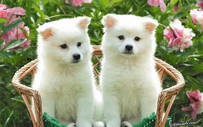 Puppy Kitten Wallpapers Kittens Puppies Together Desktop