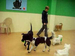 puptown charlotte doggie daycare small dog indoor With dog daycare charlotte nc