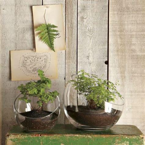 herbes aromatiques en cuisine 1000 idées sur le thème jardin d 39 intérieur d 39 herbes aromatiques sur herbes d