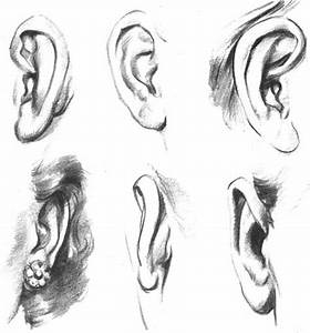 Human Ear Drawing Front