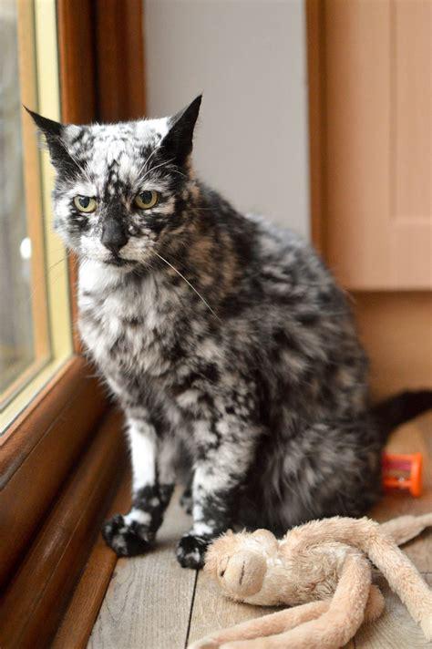 year  cat grows snowflake pattern   dark