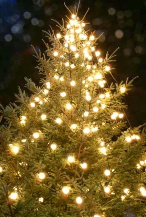 christmas lights in trees a christmas tree a christmas tree miracle a christmas
