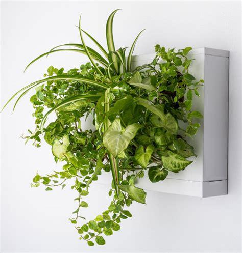 Pflanzen Bilder Selber Machen pflanzen bilderrahmen zum pflanzbilder selber machen