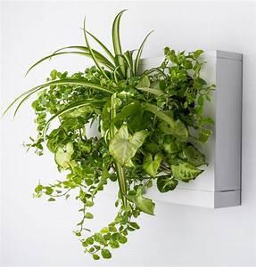 Pflanzenwand Selber Machen : pflanzen bilderrahmen zum pflanzbilder selber machen ~ Whattoseeinmadrid.com Haus und Dekorationen