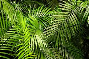 Fun Facts For Kids About The Amazing Belize Rainforest