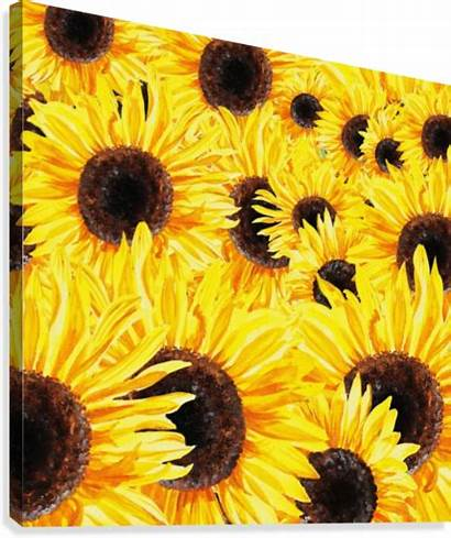 Watercolor Field Sunflower Sunflowers Painting Irina Sztukowski