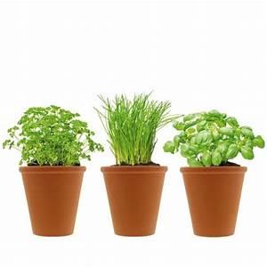 Pot Terre Cuite Ikea : herbe aromatique pot en terre cuite aromatique en pot ~ Dailycaller-alerts.com Idées de Décoration