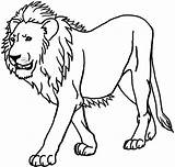Lion Coloring Clipart Pages King sketch template
