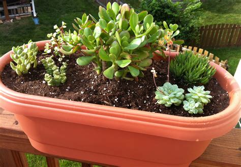 Testy Yet Trying A New Succulent Garden