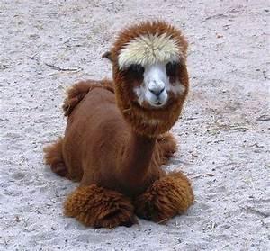 rare animal | Extremely Rare | Pinterest