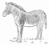 Zebra Coloring Draw Pages Drawing Printable Step Supercoloring Animal Zebras Tutorials Animals Drawings Trumpet Beginners Lines Head Liger Line Adult sketch template