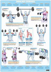 Shoulder Muscles Weight Training Exercise Chart  U2013 Chartex Ltd