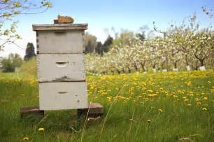 Honey Bee Hive in Orchard