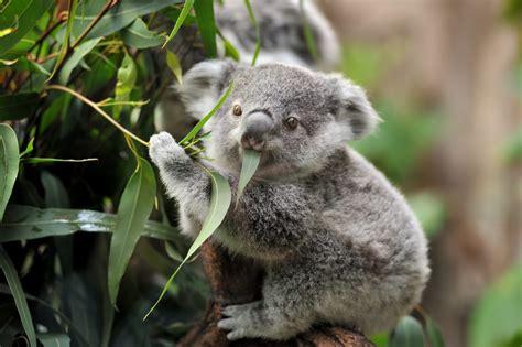 australian animals    find