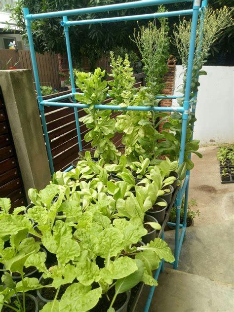 ผักอินทรีย์ ปลูกผักในกระถาง (4) 11-16-25/8 | ปุ๋ยหมัก