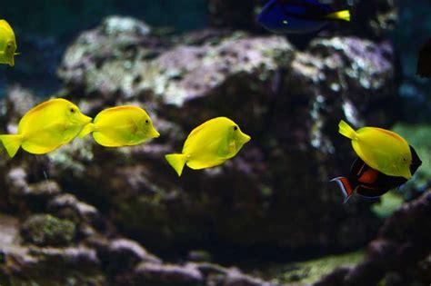 quelques astuces pour profiter au mieux de votre visite aquarium de vend 233 e