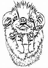 Porcupine Coloring sketch template