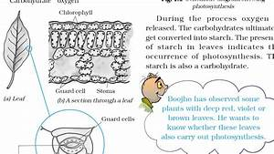 Class 7  Science  Chapter 1  Nutrition In Plants