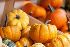 9, Uses, For, Mini, Pumpkins