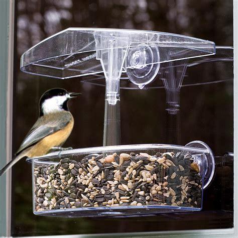 window bird feeder observer window bird feeder