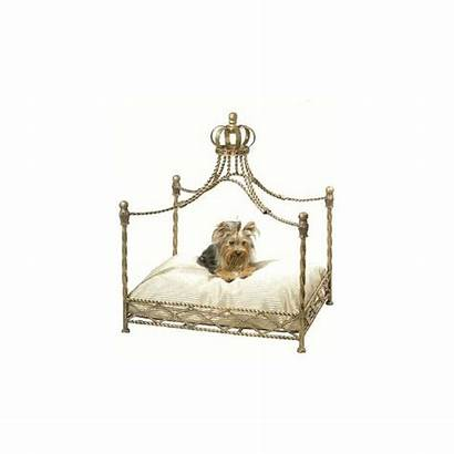 Bed Crown Dog Canopy Iron Beds Luxury