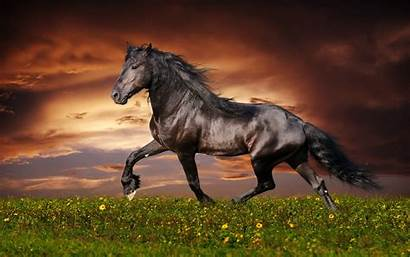 Horse Animal Background Wallpapers Wall