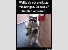 Katzen Lustig Top 10 Bilder Litle Pups