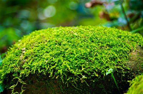 Moos » So Fördern Sie Das Wachstum