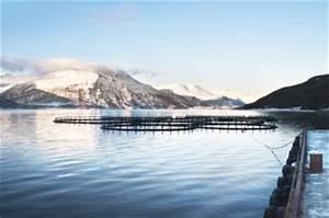 100 Tage Berechnen : irlandlachs unser lachs aus norwegen ~ Themetempest.com Abrechnung