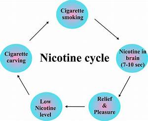 How Long Does Nicotine Stay In Your System  U2013 Drug Details