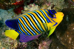 Most Expensive Tropical Fish