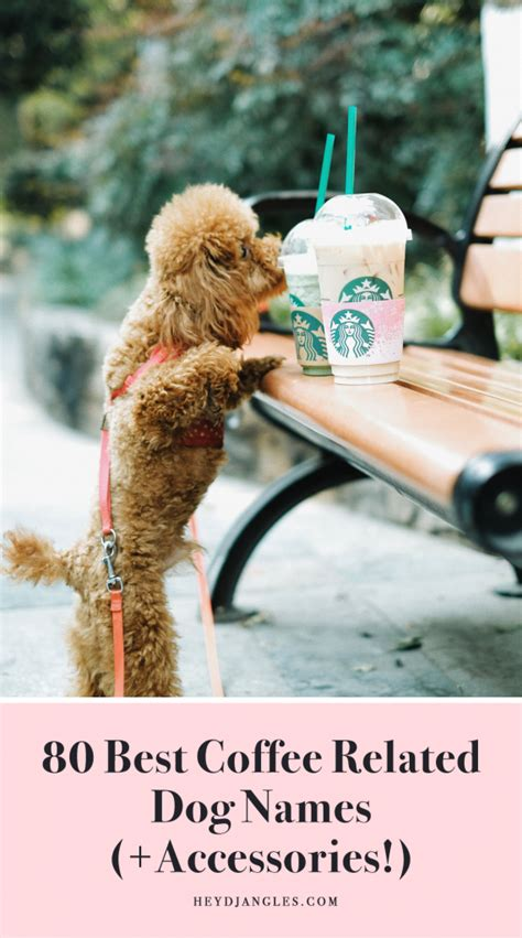 But caffeine, whether in coffee. FOR FUN: 80 Best Coffee Related Dog Names - Hey, Djangles.